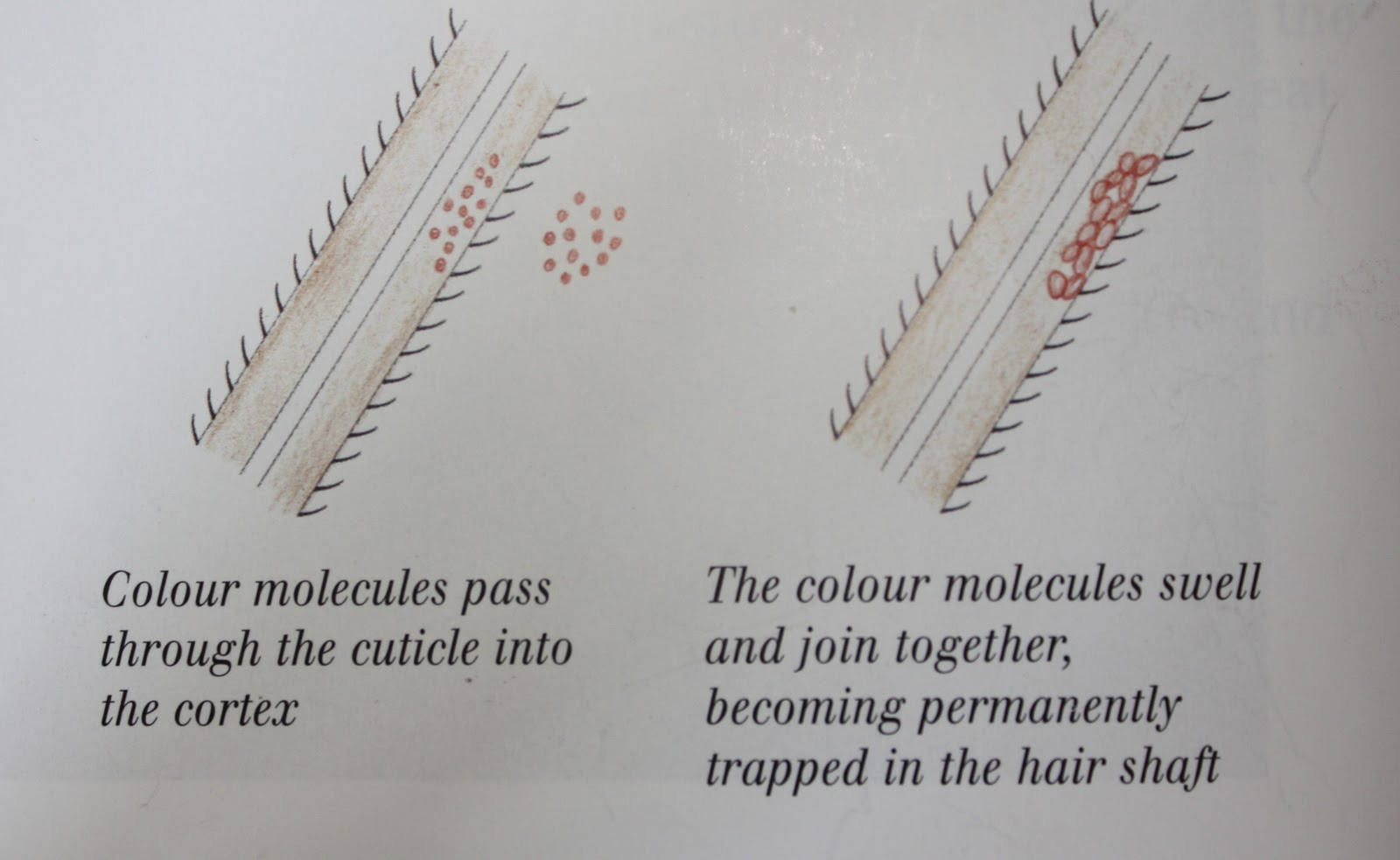 Hair Lift And Deposit Back2MyRoots Page 2