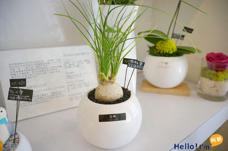 台南盆栽,日光夏蘭植物工房-8