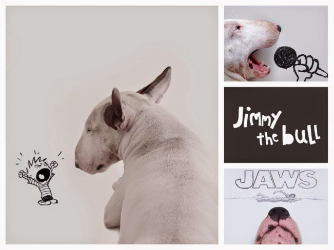 Jimmy the Bull