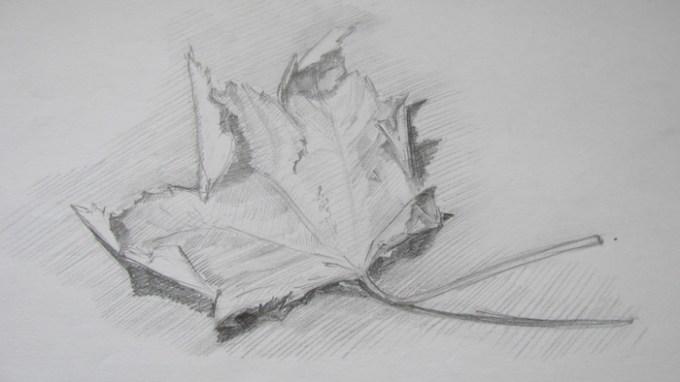 ann-sokolova-leaf