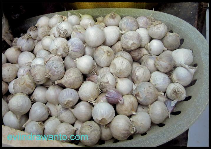 bawang putih tunggal bawang lanang dasun tunggal jurnal