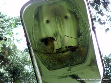 Cucaracheros en lampara