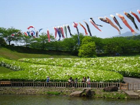 carp streamers across a river, by Ruma