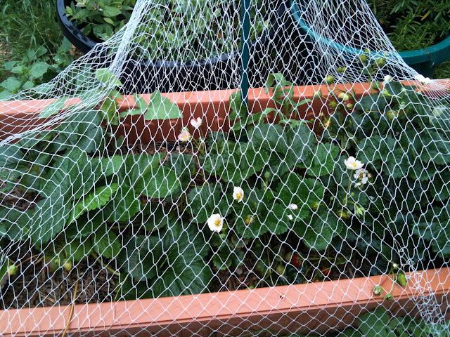 Collecting Used Coffee Grounds (UCG) (6/6)