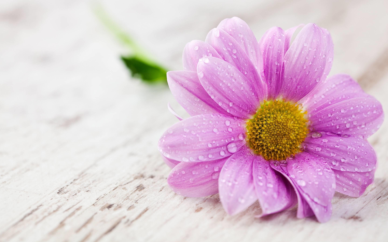 Flower Desktop Wallpaper Hd Full Screen Flowers