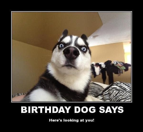 Funny Birthday Animal Memes 100 Ultimate Funny Happy Birthday Meme S The Funny Meme