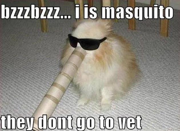 Free Download Meme Ftw Dog Fort Desktop Wallpaper Available Here
