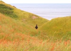 idées reçues Saint-Pierre et Miquelon