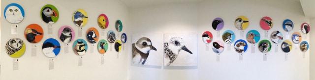 expo oiseaux des îles-de-la-Madeleine