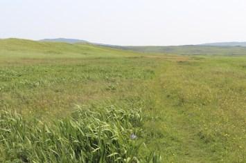 Un prairie Voyage à Saint-Pierre et Miquelon