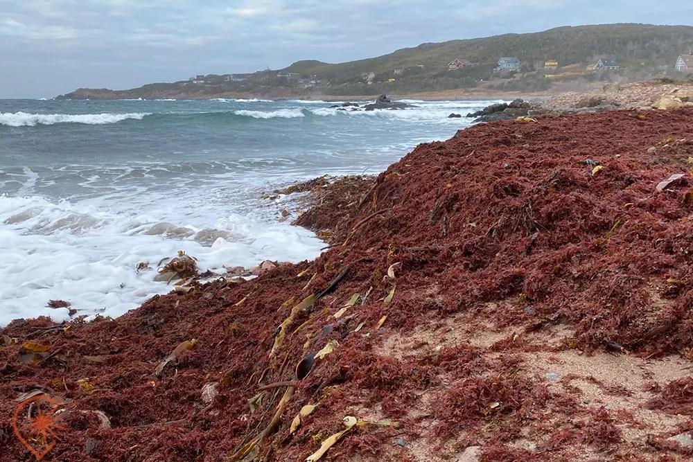 pile de goemon Saint-Pierre et Miquelon