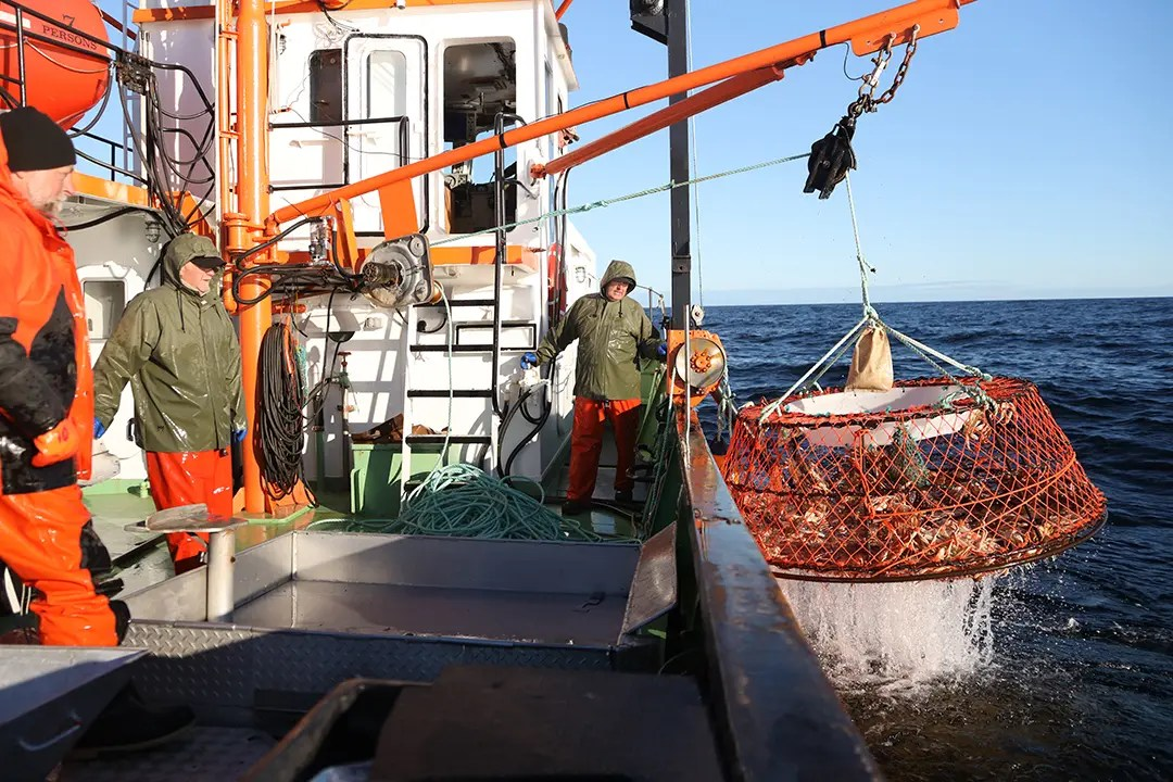 pêche au crabe des neiges casier sort de l eau