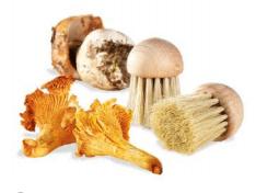 Brosse à champignons – Gobel Tellier