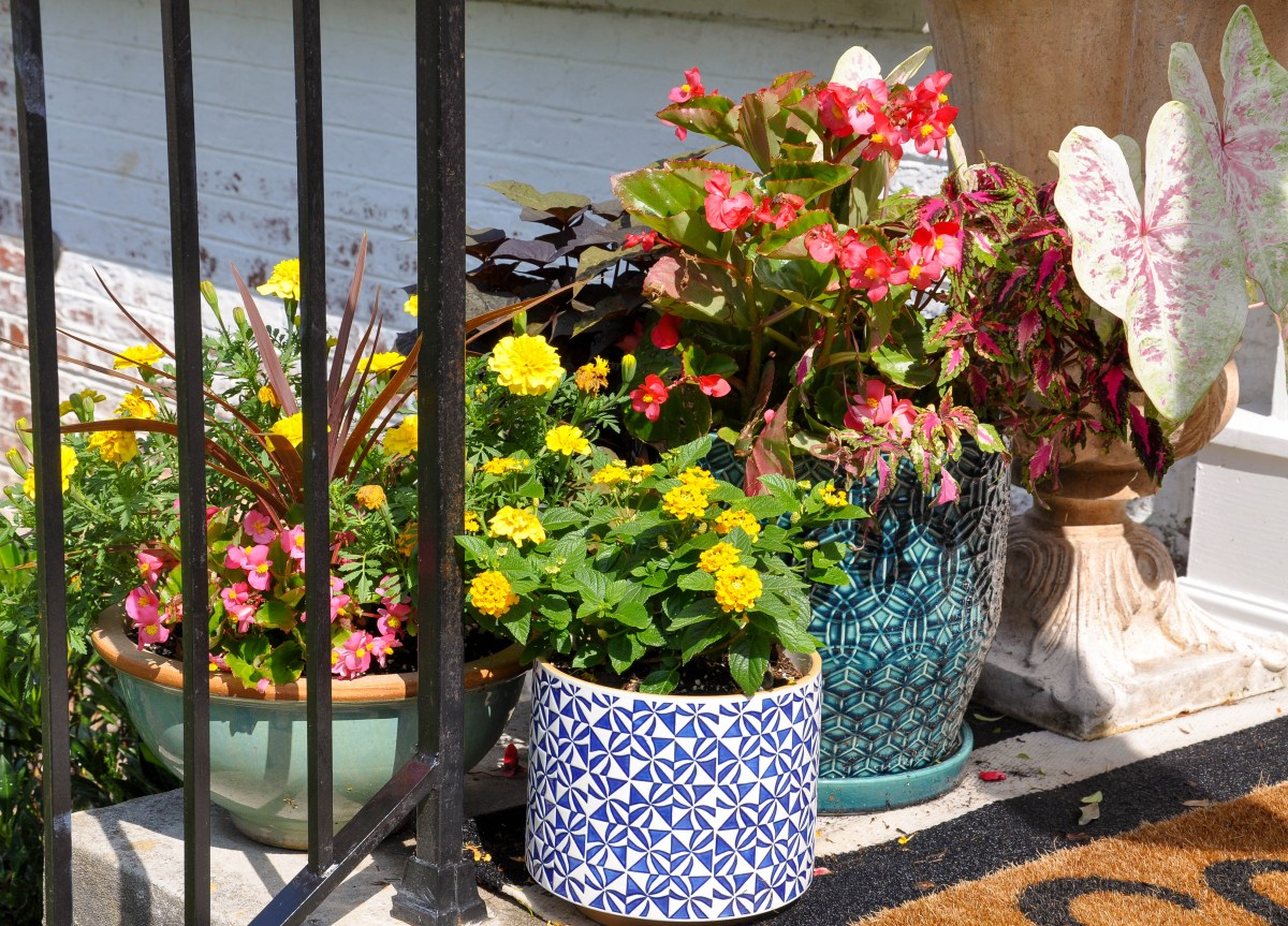 Nestled by a home's front entry, brightly colored planter pots are filled with pink and yellow summer flowers.