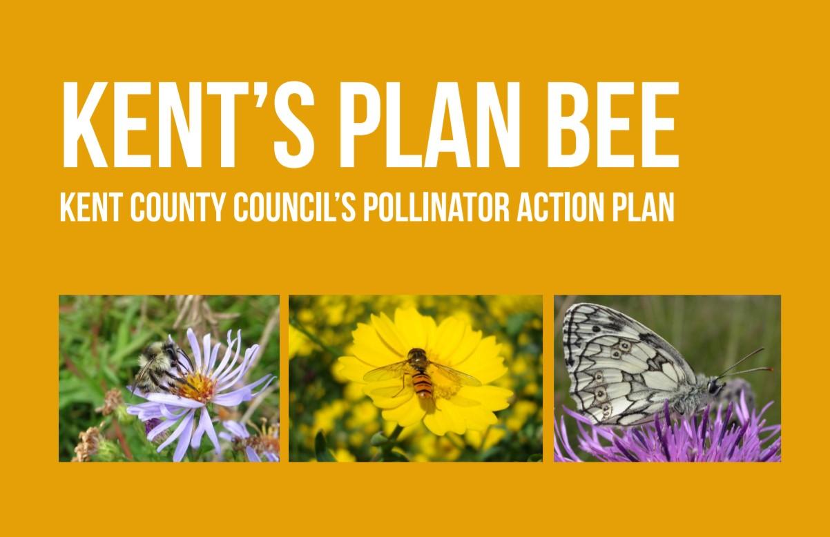 Kent's Plan Bee pollinator action plan cover