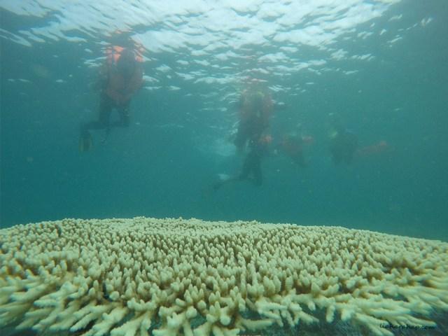 teluk-kiluan-snorkeling
