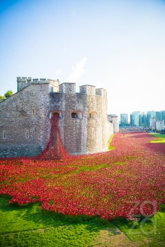 Tower Of London Remembers - The World War One - ZAZA PHOTOGRAPHY