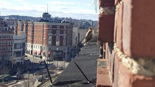 A bird of prey, likely a male Cooper's Hawk, looks out over Kenmore Square on Februrary 26th.