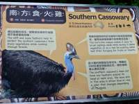 about Southern Cassowary