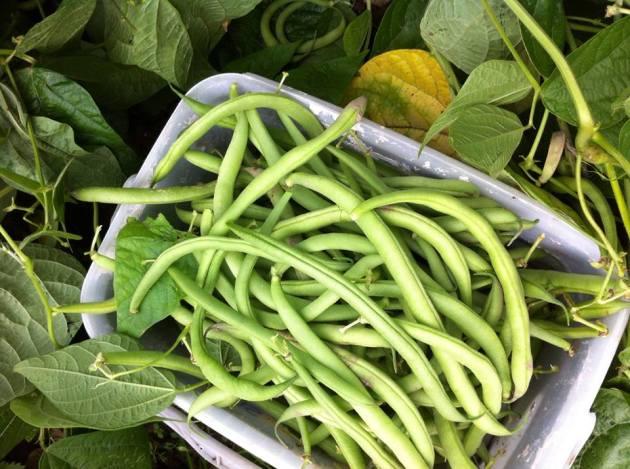 法國創意家常料理-四季豆番茄風味溫莎拉-4