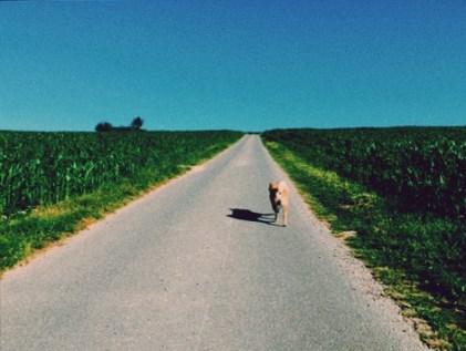 法國鄉村散步