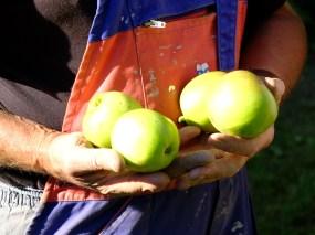 法國鄉村蘋果