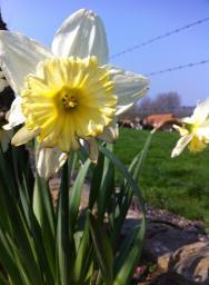 春天路邊美麗的花朵