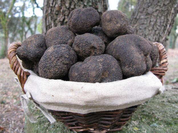 truffe-noire