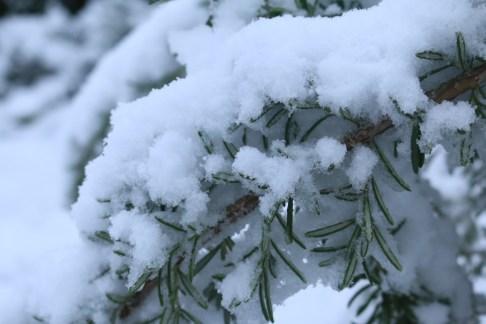 neige 12-2018