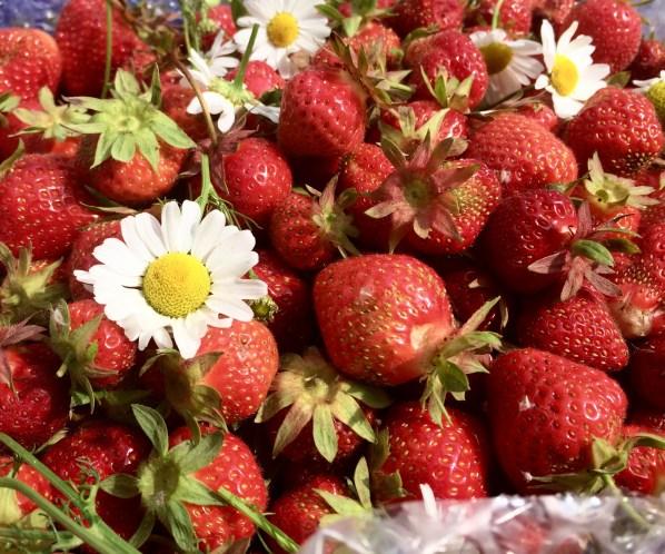 鄉村草莓園06