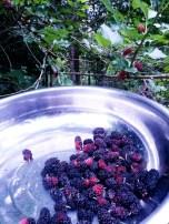 Organic mulberries