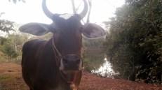 volunteer organic farm thailand