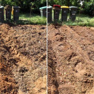 Before and after Adam planted potatoes
