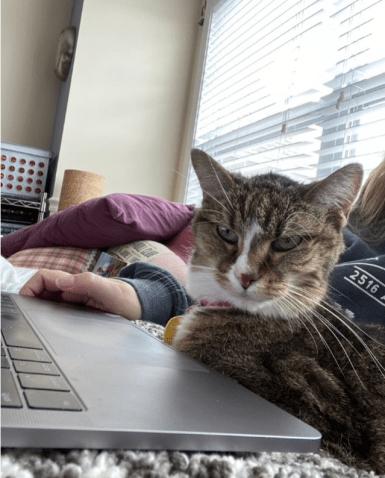 Cat sitting on laptop keyboard.