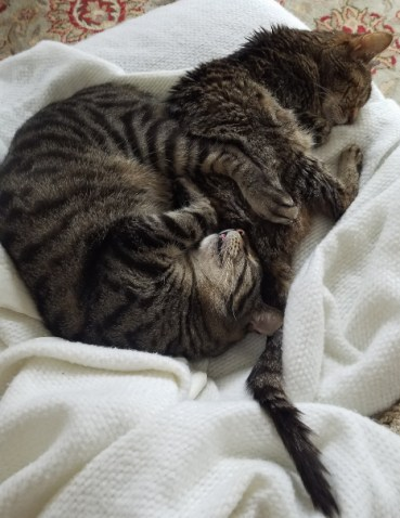 Two cats, curled up and asleep
