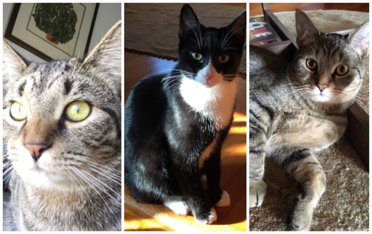 Collage of 3 cats