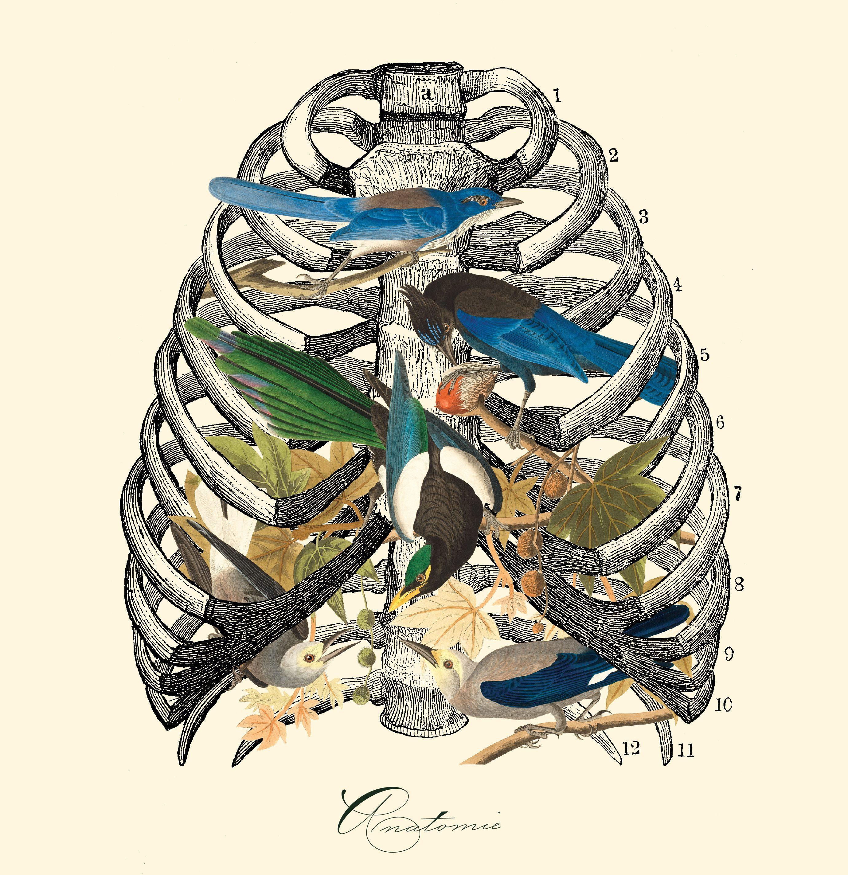 LLB – anatomie