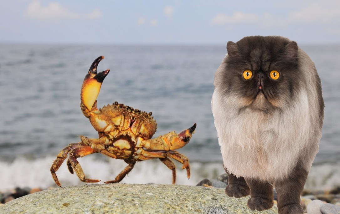 Fig and giant crab