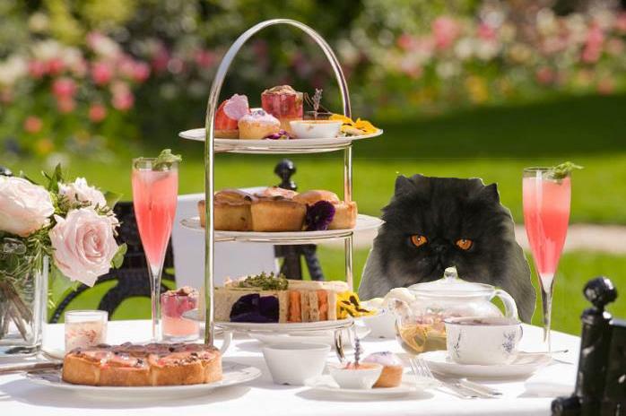 Figaro at afternoon tea