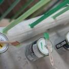 happygreen-1-by-libelul