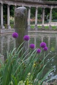 Purple-Puffs