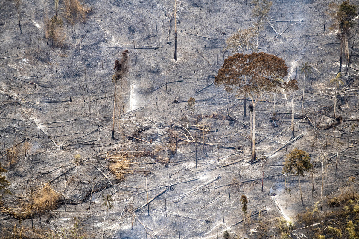 Greenpeace statement on Amazon forest fires