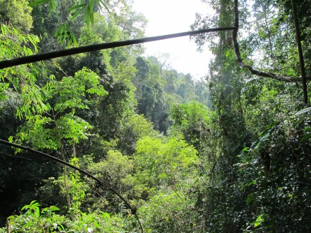 The jungle in the national park.