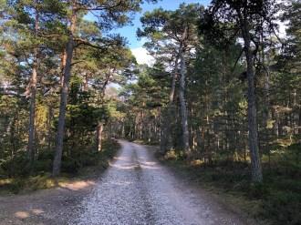 Metsämaisemaa Hiidenmaalla - Liberta.fi