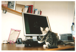 writer's cat - kitten at computer