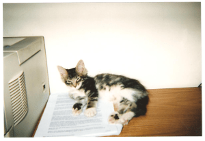 writer's cat - kitten on ms