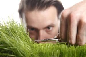 micro-editing the lawn