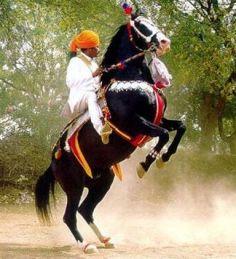 Marwari horse in Rajasthan, rider wearing jodhpur type trousers