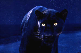 panther with glowing eyes in the dark