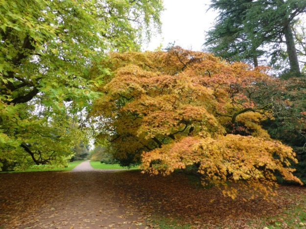 autumnal path at Westonbirt, RIP Annie Ashurst